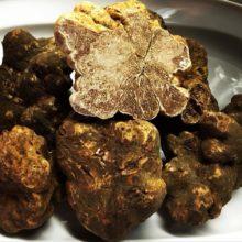 toscana-italy-truffle-sanminiato-pisa