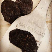 toscana-italy-truffle-sanminiato-pisa-4